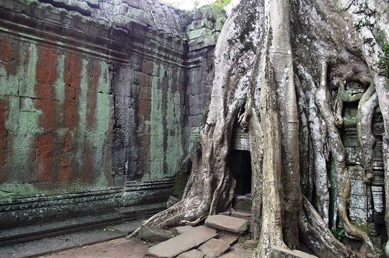Tree Over Angkor