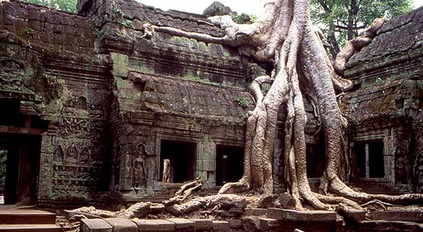 Ta Prohm Temple - of 'Tomb Raider' fame