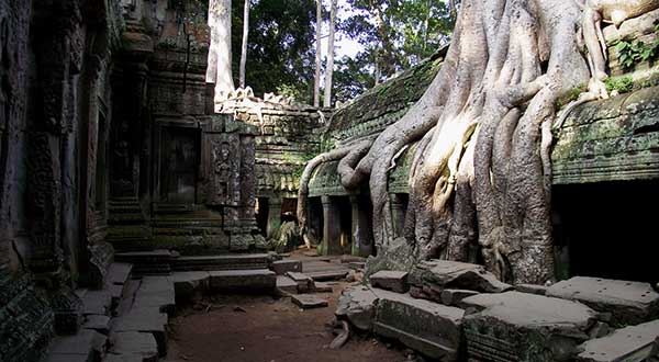 Tree root on Ta Prohm temple
