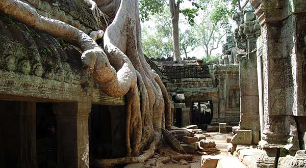 Taprohm temple trees