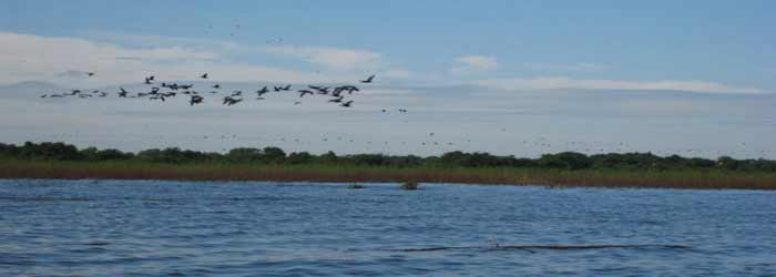 Birds flying over Tonle Sap in Cambodia