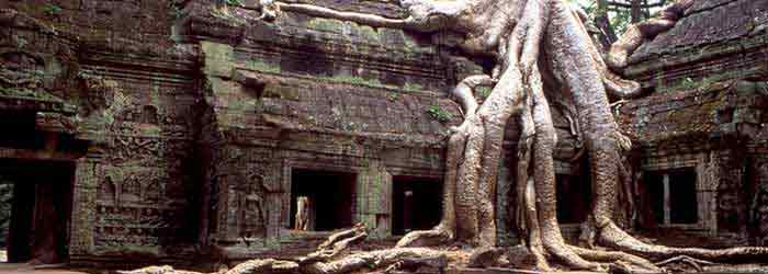 Ta Prohm temple cambodia - around 10km from Siem Reap