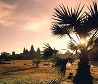 kambodscha reise - angkor wat sonnenaufgang durch die palmen