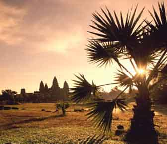 Siem Reap holiday - angkor wat palm