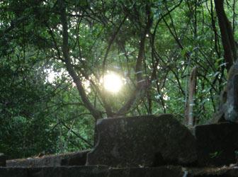 Cambodian jungle surrounds Beng Mealea Temple