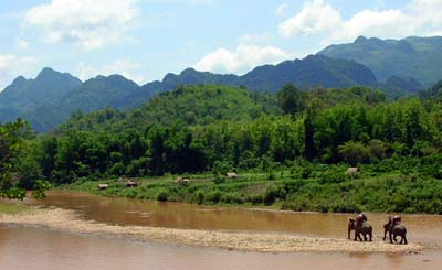 Elephant trekking in Laos