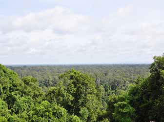 View over the jungle from the top of Phnom Bakheng