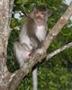 sihanoukville - singe a ream parc national