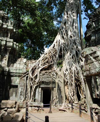Ta Prohm temple. Experience the wonder of the early explorers in Cambodia