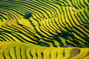 Rice terraced in Northern