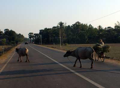 traffic pic10