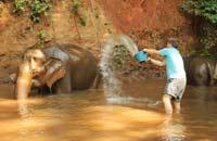 elephant trekking, mondulkiri