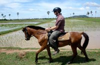 siem reap attractions - horse riding